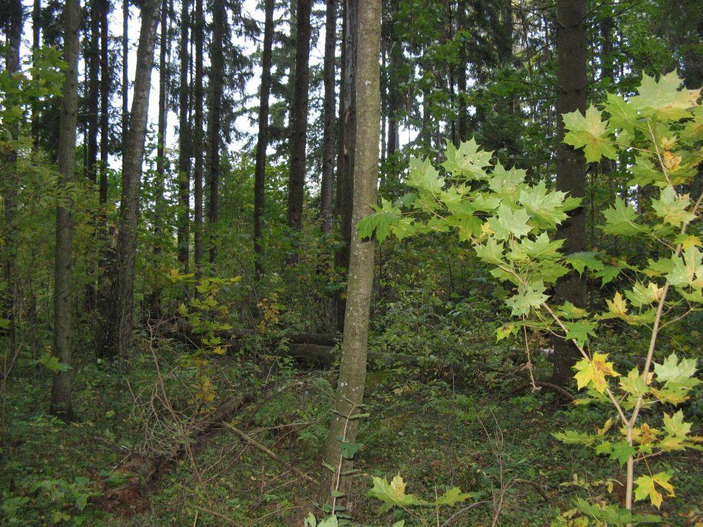 Metsapealinn 2013 on Elva linn