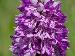Aasta-orhidee-2014.jpg