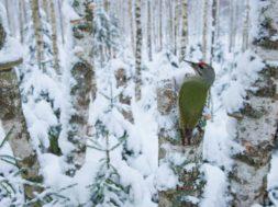 """Algas-fotovõistlus-""""Looduse-Aasta-Foto-2014"""".jpg"""
