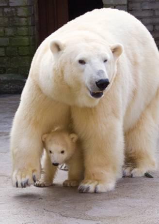 Suur jääkaru päev Tallinna Loomaaias