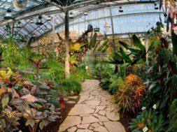 """Tallinna-Botaanikaaed-kutsub-näitusele-""""Palmid-ja-piiblitaimed"""".jpg"""