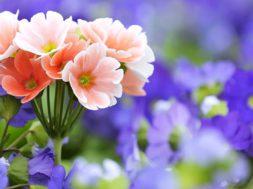 lilled.jpg