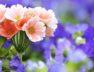 Tallinna-lillefestival.jpg