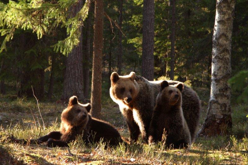 Baltikumi loodus 2 - Metsad ja rabad