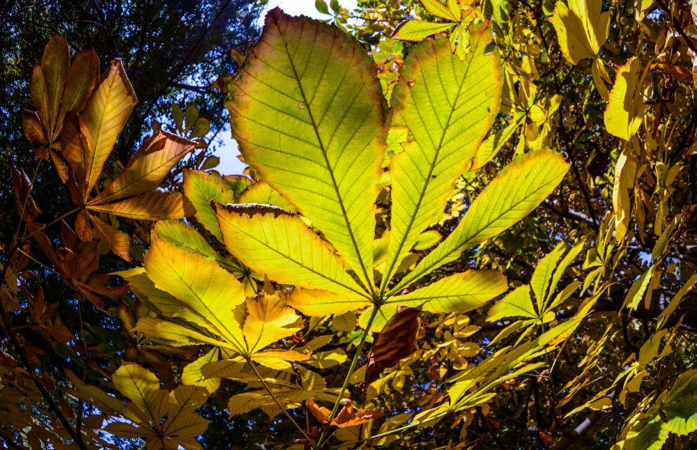 Järvselja metsakaitseala saab 90 aastaseks