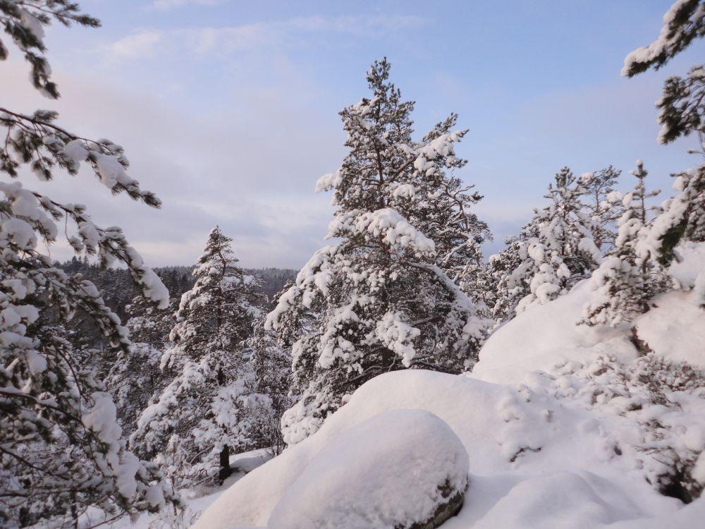 Tartus toimub metsanduse teadusseminar