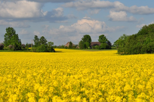 Maateemaline mess kutsub Eesti peresid maale elama