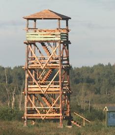 Tornides tuleb linnuvaatluspäev