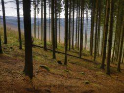 Parimate-metsamajandajate-konkurss-on-avatud.jpg