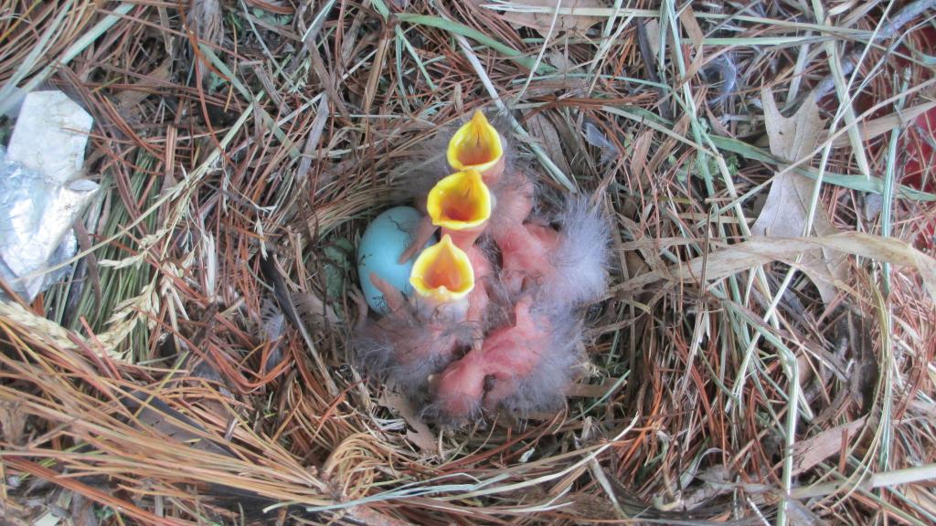KESKKONNAAMET: Heinatöödel arvesta looma- ja linnupoegadega