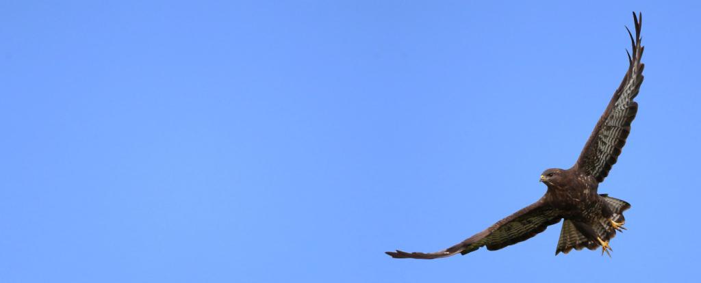 Linnurahvas suvitab Alatskivil