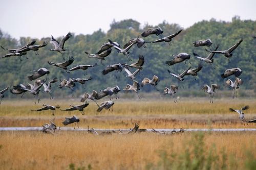 LINDE VAATLEMA! Nädalavahetusel oodatakse linnurahvast loodusessse sulelisi kirja panema