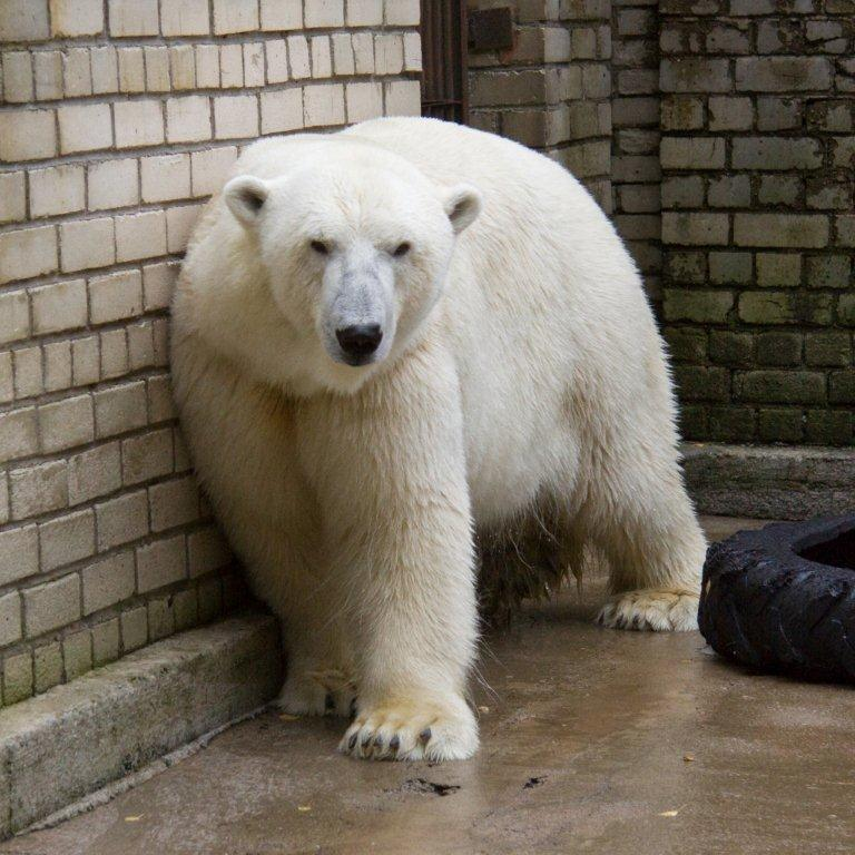 Jääkaru-Nord+2