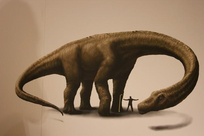 EAK eksponaat võrdle pikkust dinoga
