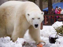 Jääkaru-Nord.jpg