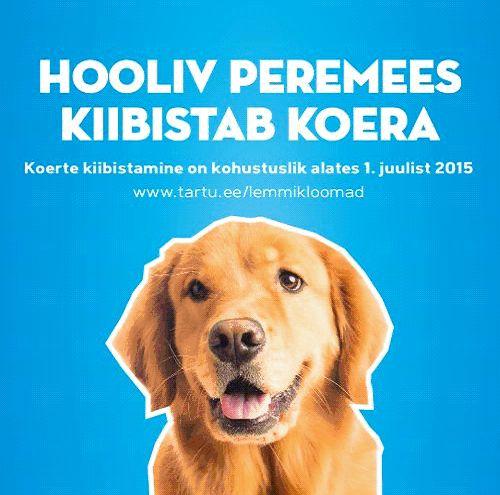 KOERTE KIIBISTAMINE! Laupäeval saab Tartus koeri kiibistada ja registreerida soodushindadega