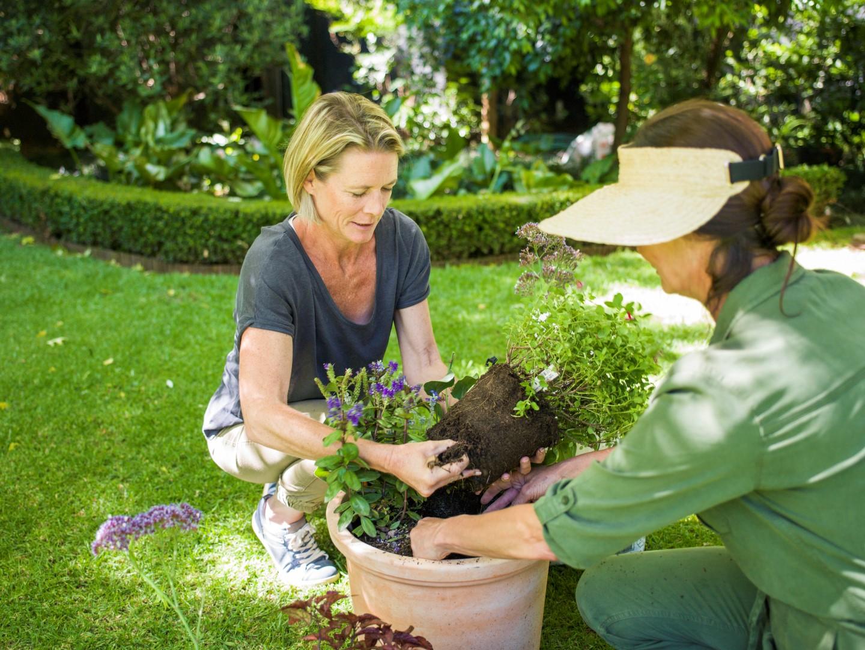 OLE TEADLIK! Millised taimed võivad koos kasvada ja millised mitte?