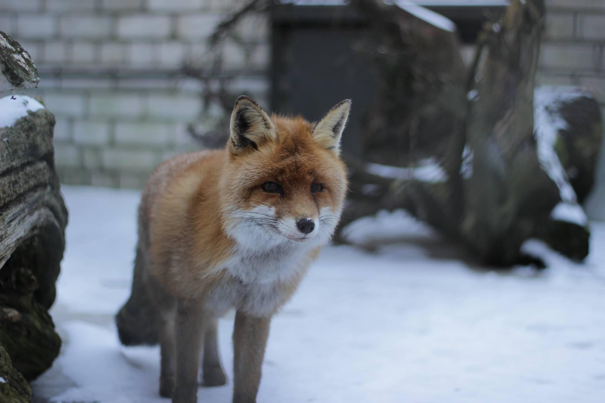 Uus heategevuslik veebipood! Loomaaed avas veebipoe ohustatud liikide kaitse toetamiseks