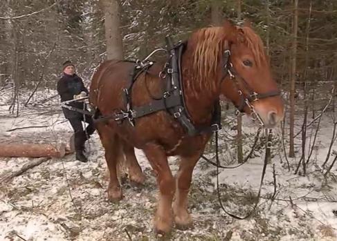 Tudengid õppisid vanal viisil metsa tegema
