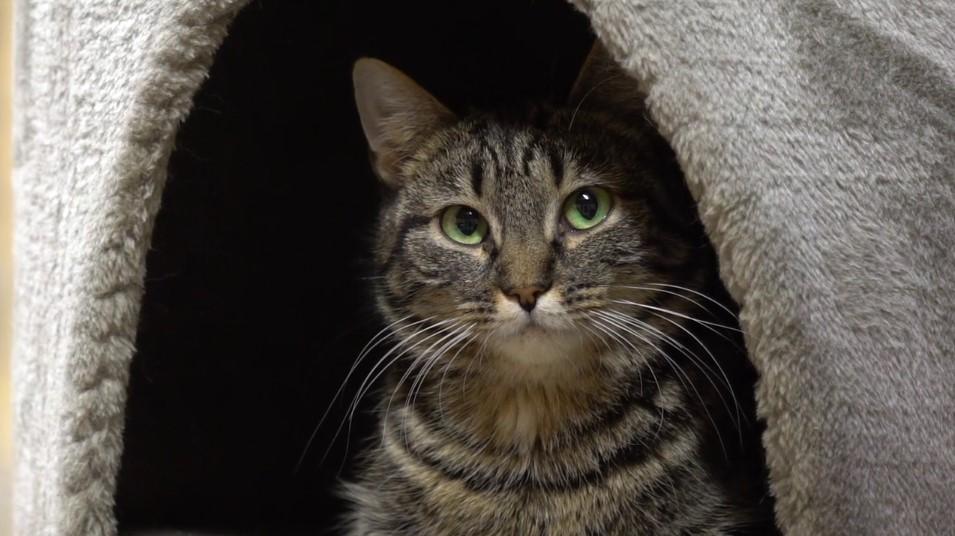 Veebruaris saab varjupaigast kassi loovutustasuta
