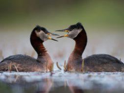 Mina armastan sind rohkem (Foto Kalmer Lehepuu)