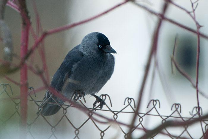 KESKKONNAAMET SOOVITAB! Praegu on veel võimalik ennetada konflikte lindudega