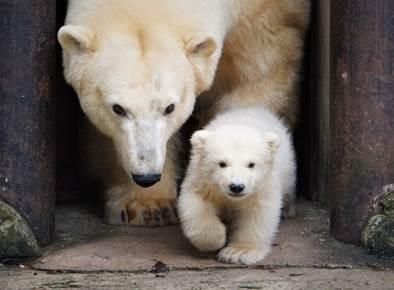 Pühapäeval toimub rahvusvaheline jääkaru päev