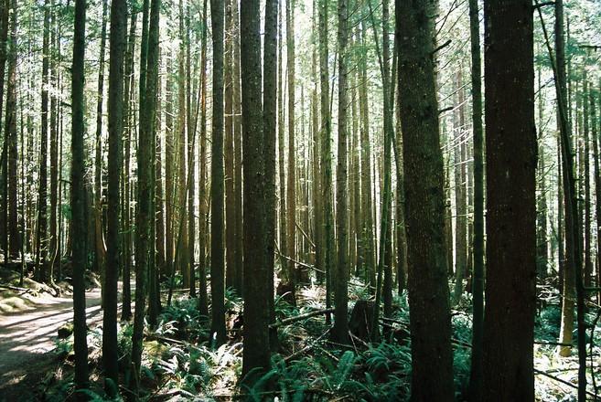 Sõrvele soovitakse luua riiklikku looduskaitseala