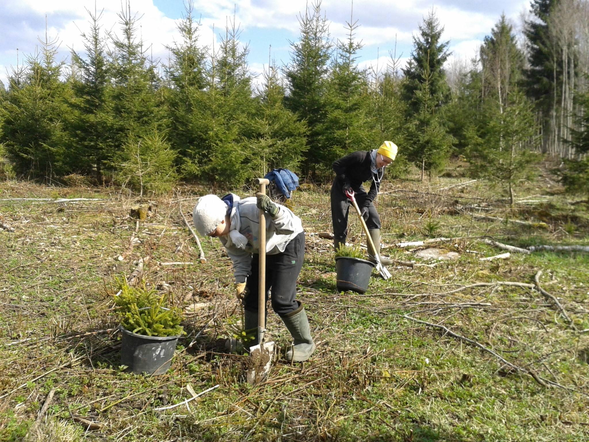 Käes on metsaistutusaeg! Metsaühistud üle Eesti kutsuvad metsa istutama