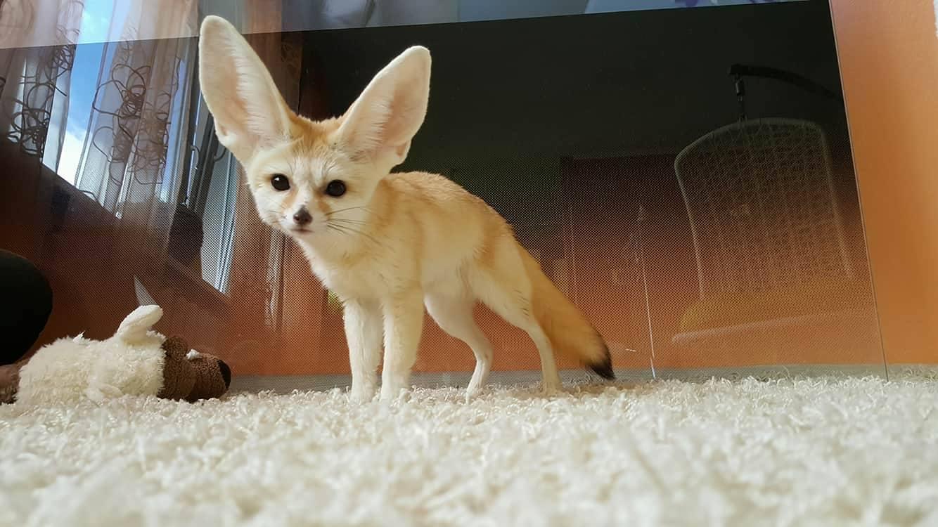 LEMMIKUD KONTORIS! Tele2 lülitab lemmikloomade päeval nunnumeetri sisse