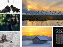 Loodusfotograafia