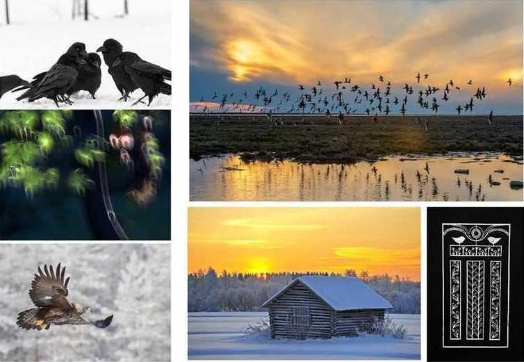 Põhja-Soome loodusfotograafide tööd jõuavad Paidesse