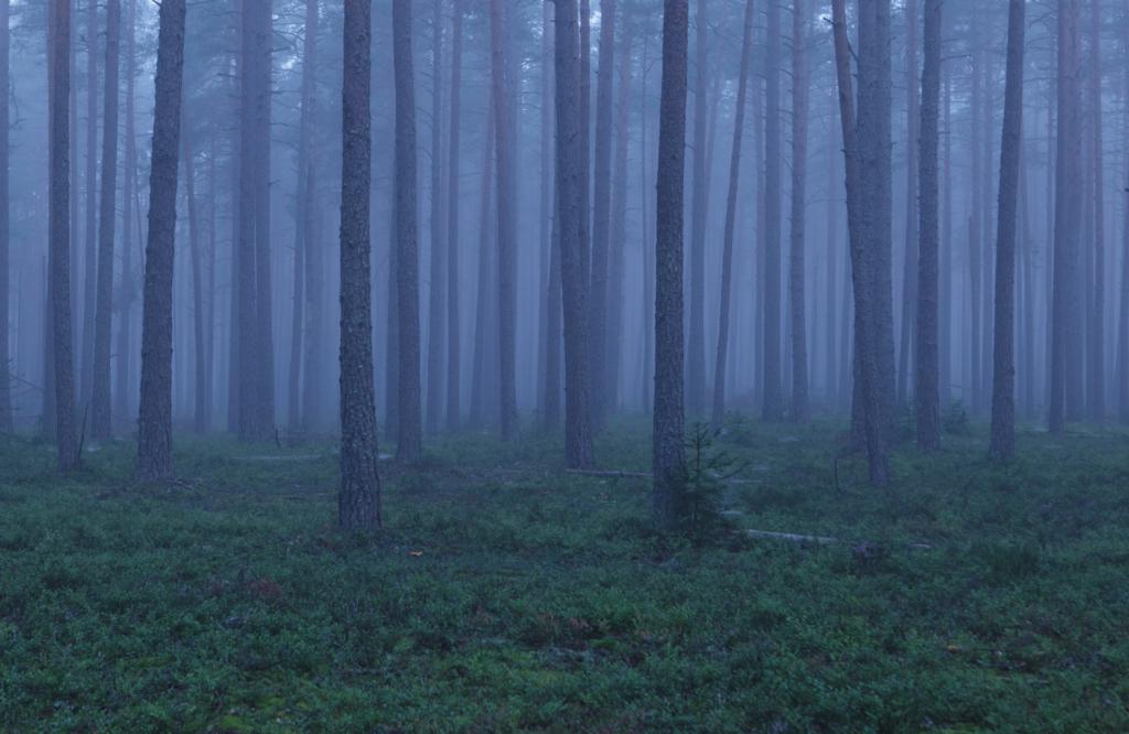 Talgupäeval pannakse Valgamaal kasvama 40 000 puud