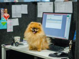 Lemmikloomaga tööl