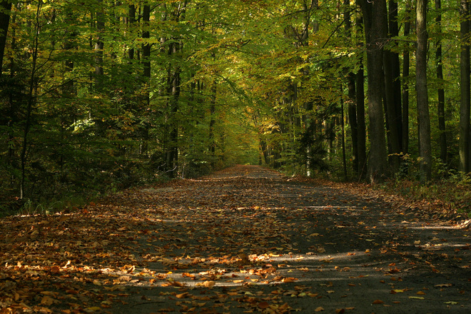 RMK panustab uude metsapõlve 18 miljonit eurot