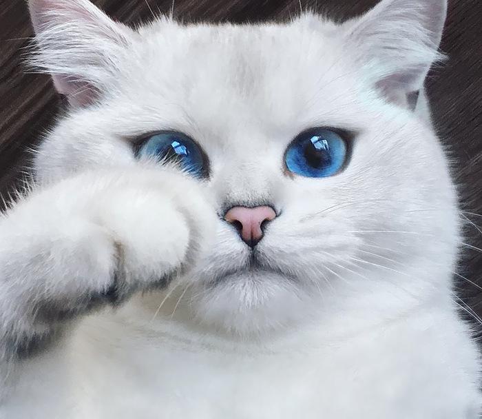 """7 rakendust tänase """"kallista oma kassi"""" päeva tähistamiseks"""