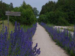 Läänemaa Tervisetee (foto Ülle Lass)