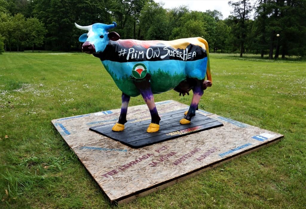 Värvikirev piimalehm kutsub Viljandi inimesi piimatooteid tarbima