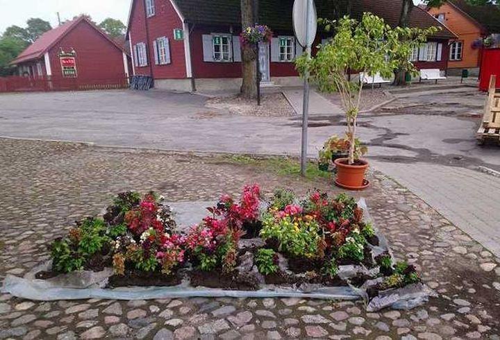 Paide linn jagab huvilistele lilli