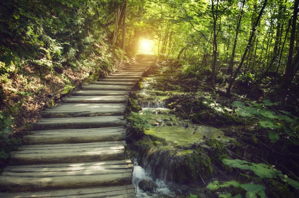 Täna tähistatakse Eestis ülemaailmset õnneliku metsa reedet