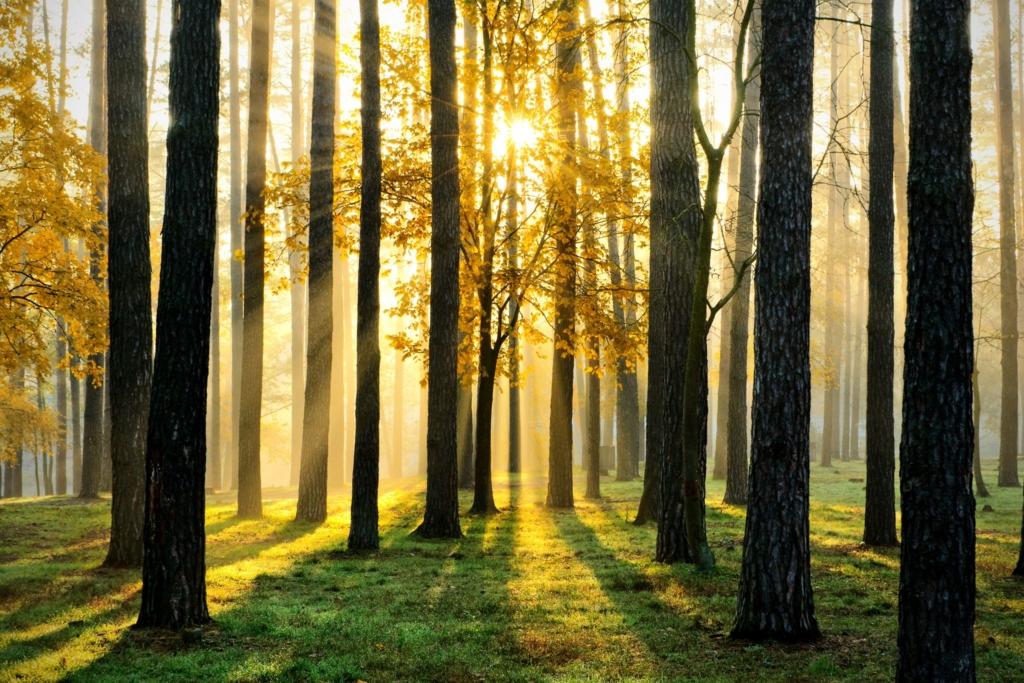 TÄNA! Eesti metsade kaitsjad kutsuvad täna rahvakogunemisele Meeleavardus