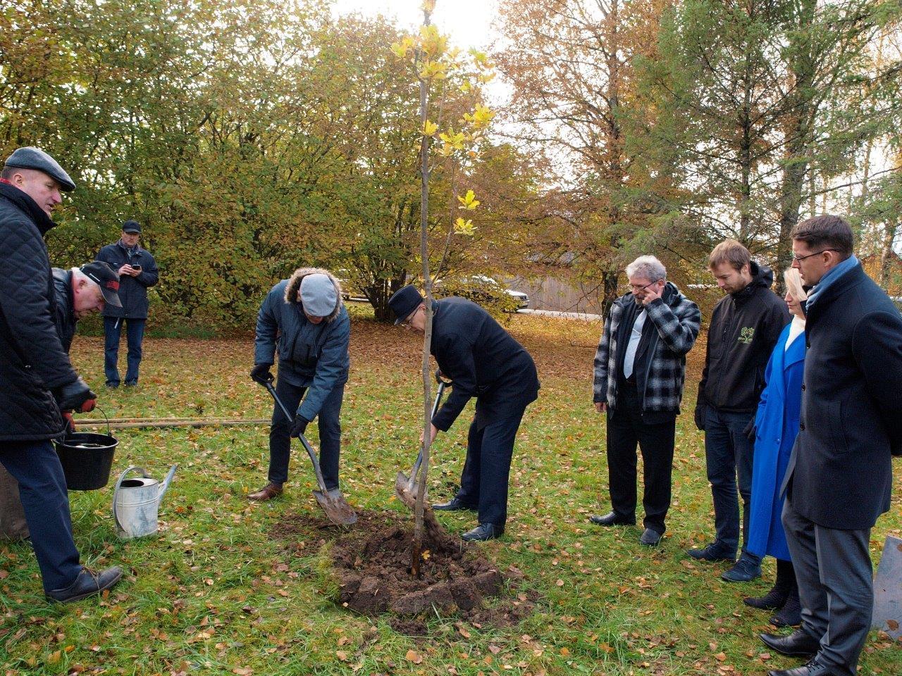 Lugupidamise märgiks maavanema-ameti vastu istutati Sõpruse parki tamm
