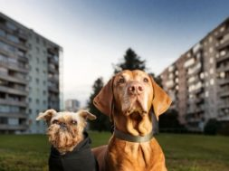 Tallinna koerad