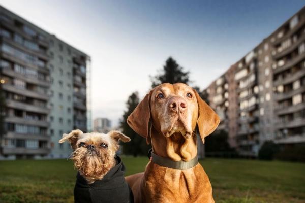 """Täna avatakse Tallinna Linnamuuseumis näitus """"Urban Dogs – Tallinna koerad"""""""