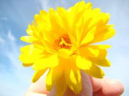 kollane lill