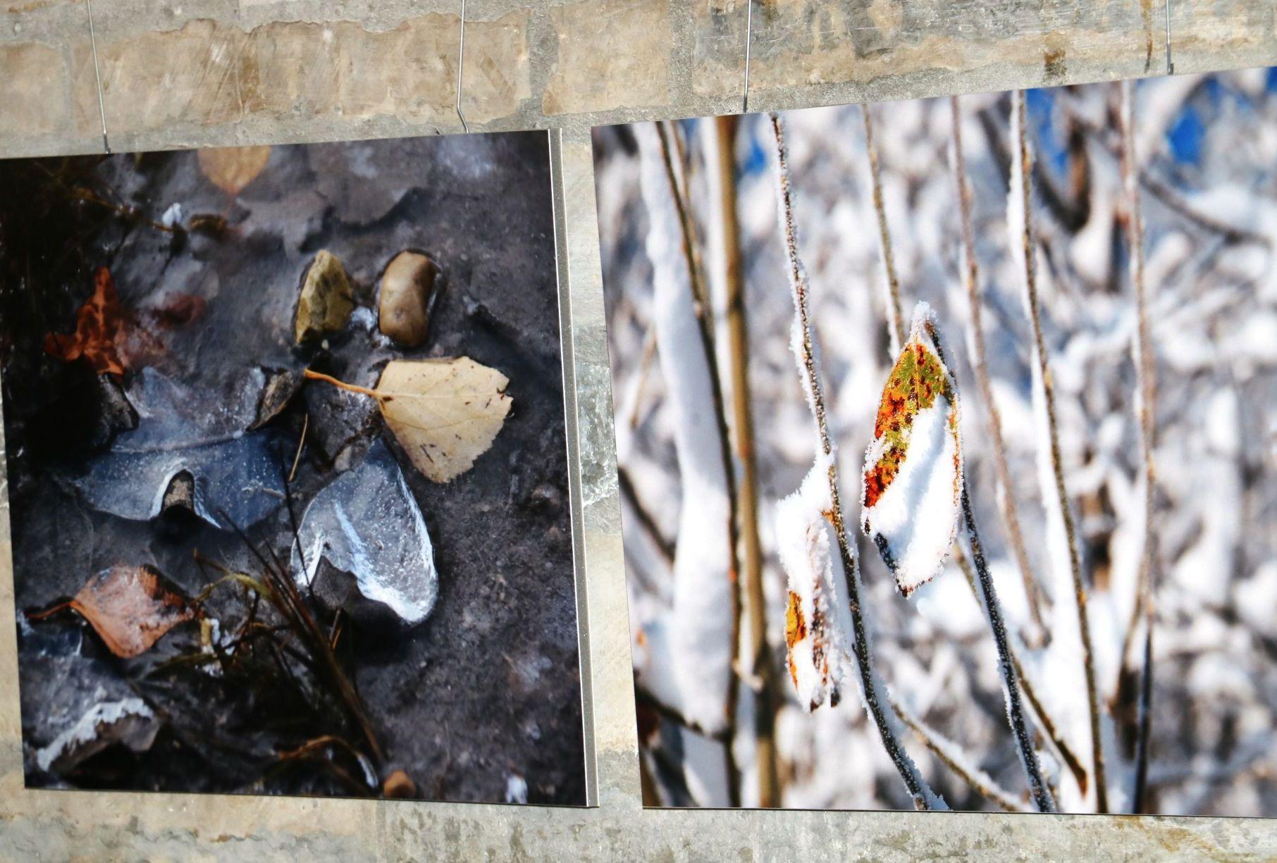 LAHKUNUD LY AUKS! Ly Menovi fotonäitus Paide Kultuurikeskuses mälestab varalahkunud andekat fotograafi