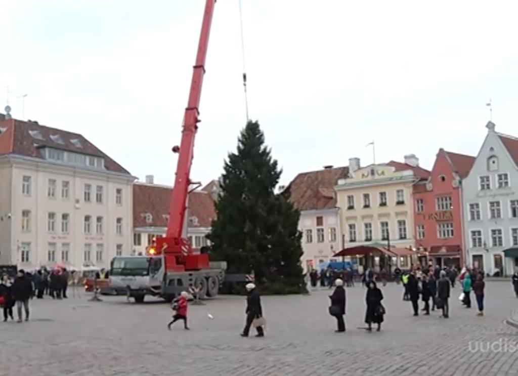 VIDEO! Tallinna jõulupuu jõudis Raekoja platsile