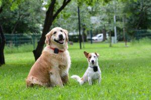 Jackie ja Toto