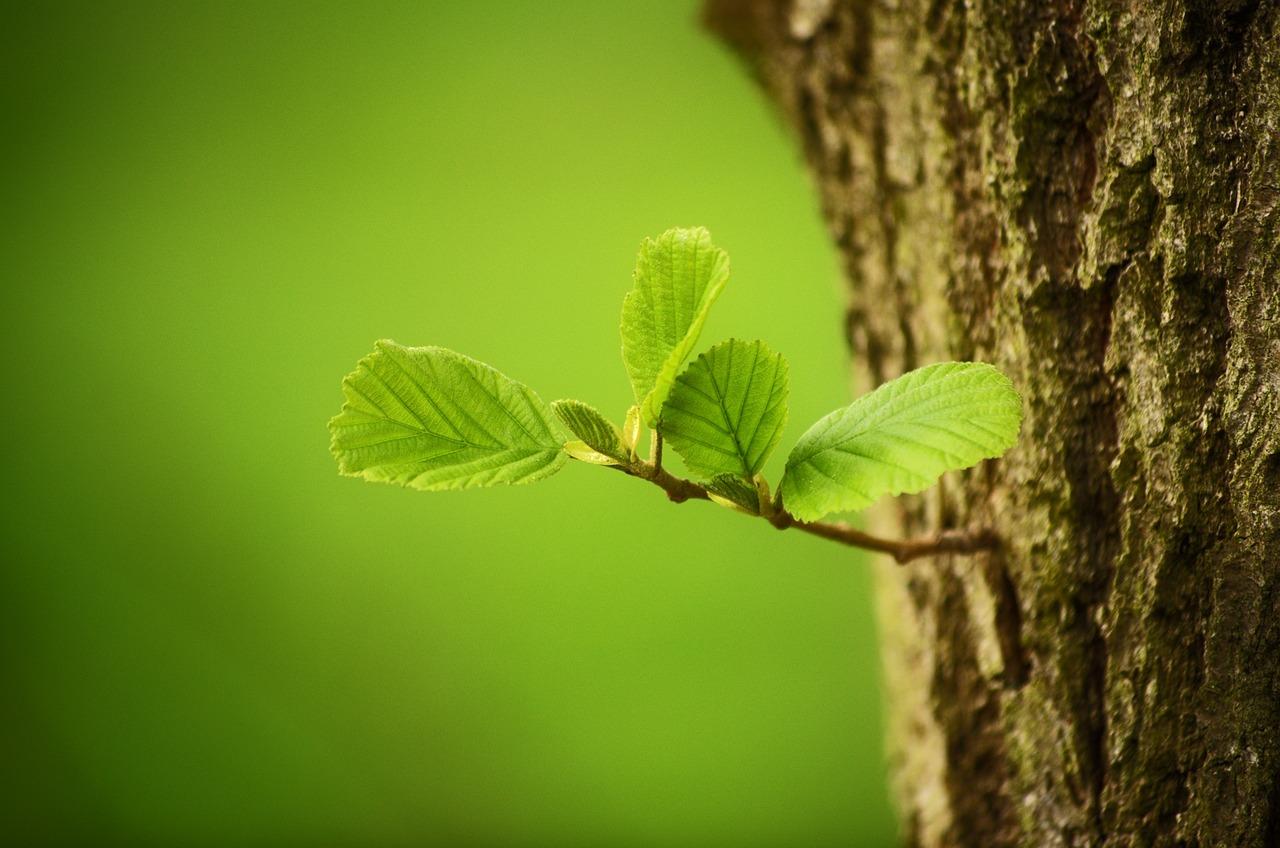 Rohelise Energia lepingu sõlminute arv on aastaga kolmekordistunud, esirinnas naised ja noored!