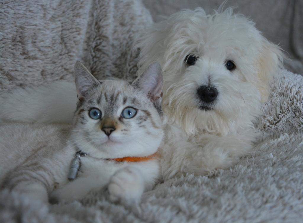 Eesti Loomakaitse Selts kutsub oma lemmikloomi steriliseerima ja kastreerima